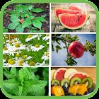 Plantas y frutas medicinales gratis icon