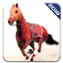 Angry Horse Racing 3D Simulator icon