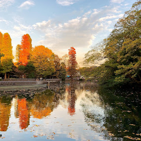 Inokashira Park Kichijoji Japan by Bill      (THECREOS) Davis - City,  Street & Park  City Parks ( #yellow, #tree, #trees, #fall, #orange, #park, #lake, #tokyo, #reflection, #green, #kichijoji, #leaves, #japan, #autumn, #inokashirapark, #red,  )