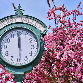 Cherry Valley in Bloom by John Tuttle - City,  Street & Park  Historic Districts ( cherry, cherry_valley, tree, blooming, blooms, clock, green, pink, flowers, cherryvalley,  )