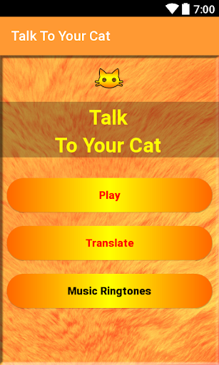 Talk To Your Cat 3.0 DreamHackers 2