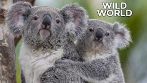 Wild World thumbnail