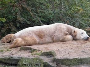 Photo: Knut ist etwas platt ;-)