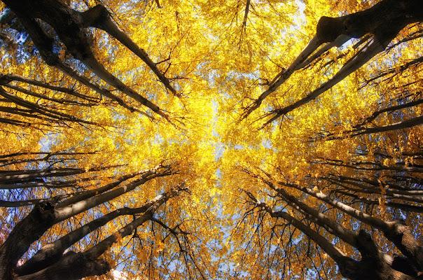 Simmetrie d'autunno di nidinola