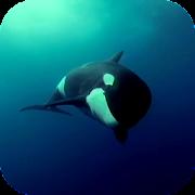 Orca 3D Video Wallpaper