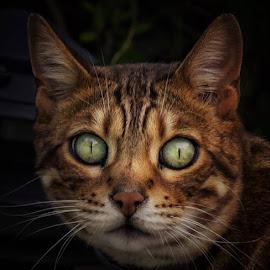 by Jody Grenier - Animals - Cats Kittens (  )