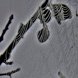 Dew on spider web by Govindarajan Raghavan - Abstract Water Drops & Splashes (  )