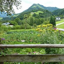 Photo: Garten vom Rettenbachgut im Juli