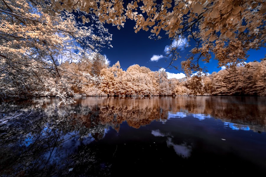 View to another world by Thorsten Scheel - Landscapes Waterscapes ( clouds, water, ir, blue sky, infrared, trees )