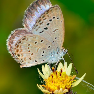 May 6 butterfly 2.jpg