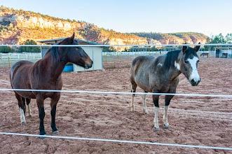 Photo: Best Friends Animal Sanctuary, Kanab, Utah, USA