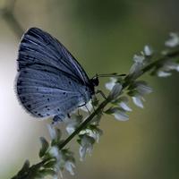 Farfallina azzurra.. di AlfredoNegroni