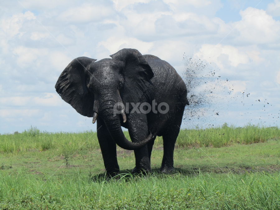 Stay Cool by Jacob Uriel - Animals Other Mammals ( chobe, botswana, green, elephant, safari, africa )