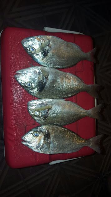 Pesca agrupacion
