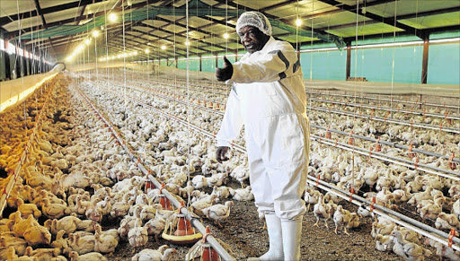 DESPERATE: Jabulani Richard Ngwenya of JR Ngwenya Poultry Farm is a chicken farmer implementing strict biosecurity to safeguard his farm from the deadly bird flu Picture: GALLO IMAGES