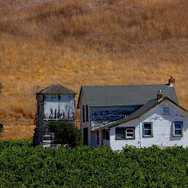 Landscape of building and vineyard by Robin Rawlings Wechsler - Buildings & Architecture Decaying & Abandoned ( vineyard, harvest, fall, vines, house, landscape )