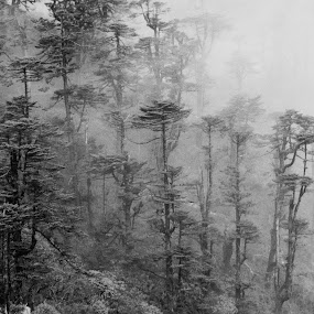 Forest in the Winter by Debdatta Chakraborty - Landscapes Weather ( pwcwinte )