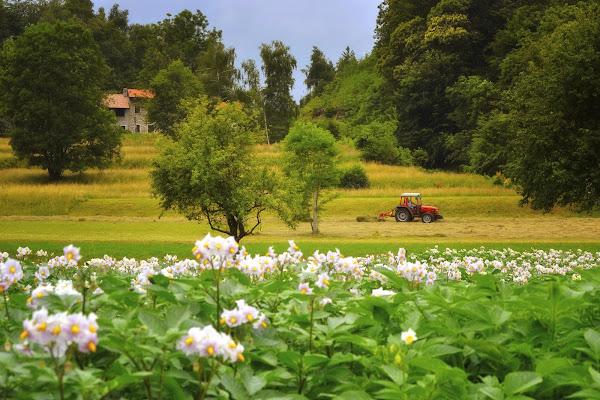 Coltivazioni rurali di Herrfulvis