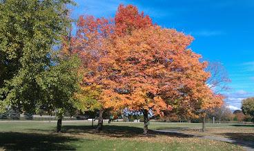 Photo: Ford Motor Company World HQ Arboretum