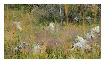 Photo: Eastern Sierras-20120716-605