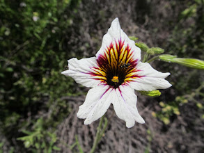Photo: Panza de Burro