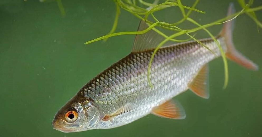Ловля на донку мирной рыбы