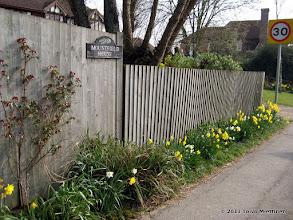 Photo: Narsississit kukkii täälläkin.