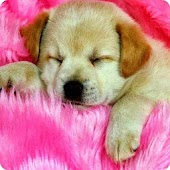 Puppy pink lovely