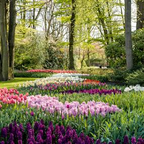 by Benjamin Arthur - Flowers Flower Gardens