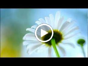 Video: A. Vivaldi  Concerto for flautino, strings   b.c. in C major (RV 444)   Amarillis -