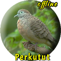 Suara Burung Perkutut Lokal Gacor icon
