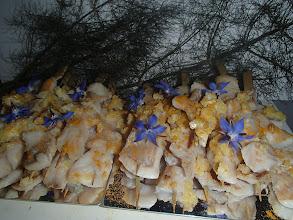 Photo: Mini brochette de dorade au citron et au gingembre