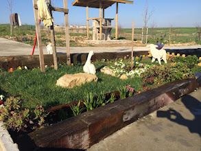 Photo: Hercailer kafa sallıyor, sümbüllerim coşmuş, bahçemin bereketi eksilmesin.