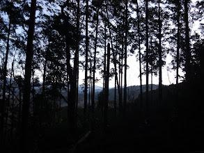 樹間から景色