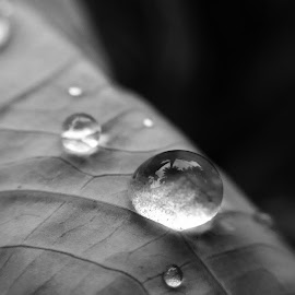 Drops in monochrome by Nilanjan Chakraborty - Abstract Water Drops & Splashes ( mobilography, monochrome, macro photography, depth of field, drops,  )