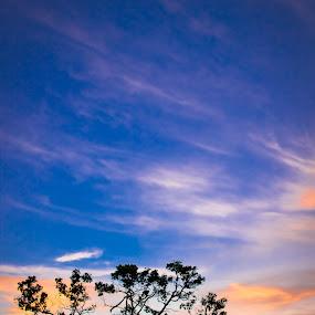 tree by Hendra De Strijders - Landscapes Sunsets & Sunrises