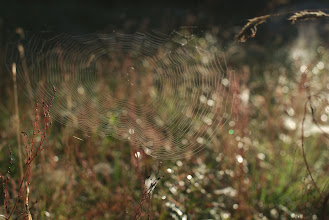 Photo: The life of a spider in Glaskogen must be awesome