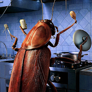 Cockroaches in the kitchen