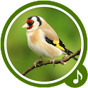 Bird Sounds - Bird Ringtones icon