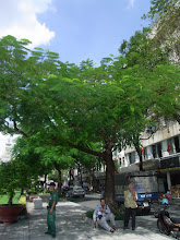 Photo: 写真じゃ伝わらないけど、この木は目を奪われた。美しい。