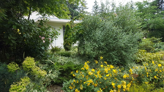 Photo: The yellows are out with euphorbia at left, and  hypericum. Widuschek Garden