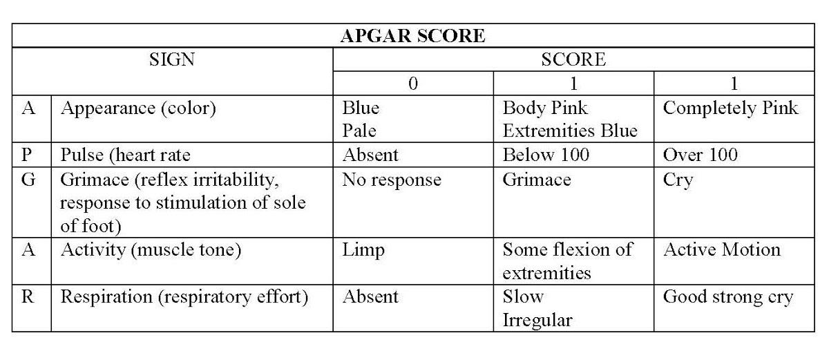Apgar Score Google Arts Culture