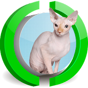 Sphynx Cat Live Wallpaper