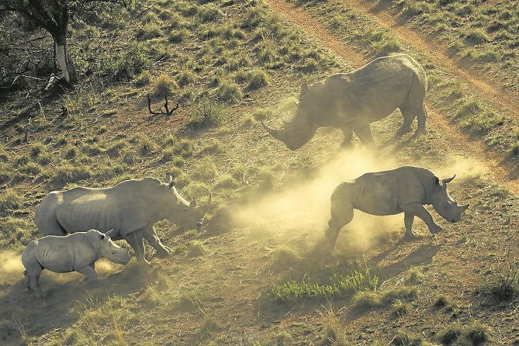 South Africa is home to more than 90% of the global rhino population. Picture: THE TIMES