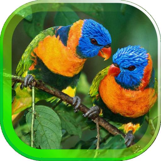 Parrots Voices cool HD LWP 個人化 App LOGO-APP開箱王