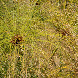 Plants abstract by Dirk Luus - Nature Up Close Leaves & Grasses ( green, nature, plants, grass, abstract )