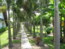 Photo: Vietnam walkway