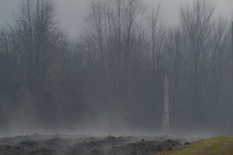 nella nebbia di paolo_ross