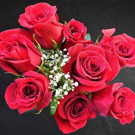 Rose bouquet  by Carol Leynard - Flowers Flower Arangements ( red roses, bouquet, flower arrangement, roses,  )