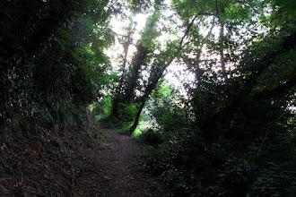 Photo: da Sant'Agata a Massa lungo sentieri dimenticati